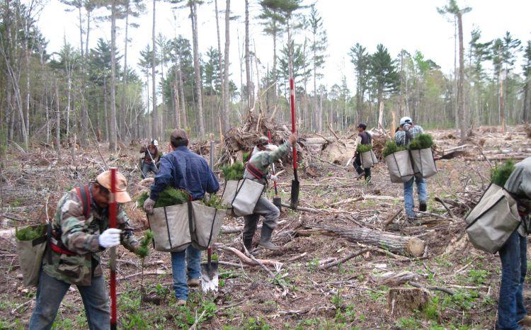 reforestation-us